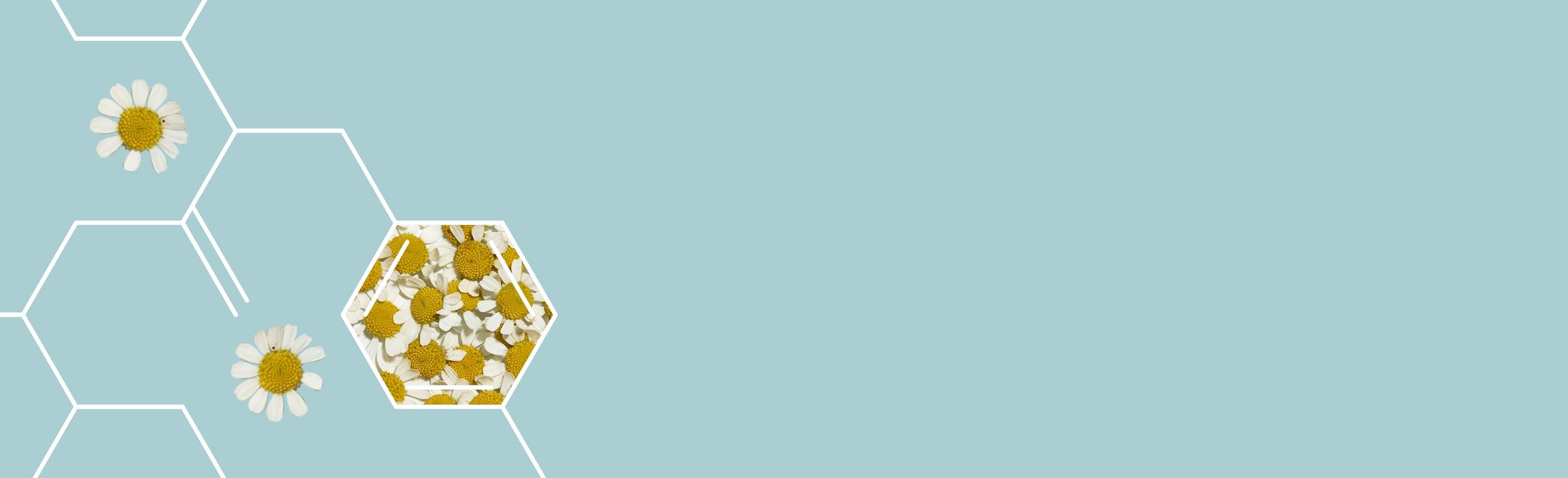 matricaria como ingrediente en los productos aveeno para el alivio de la piel irritada