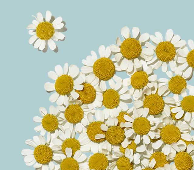 daisy feverfew ingredients in aveeno active naturals