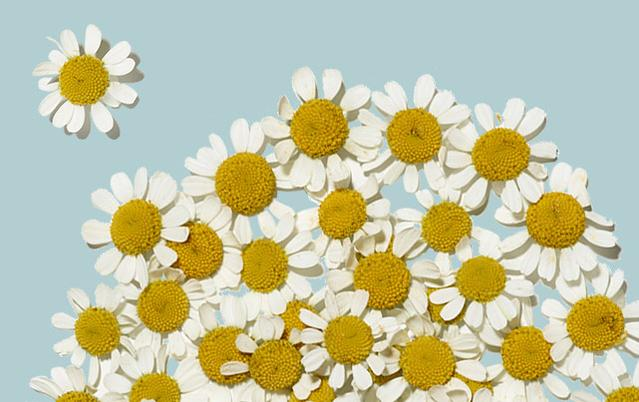Aveeno skin care ingredients - Feverfew