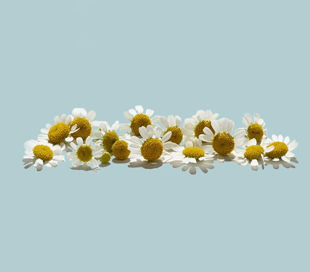 feverfew ingredient is in aveeno lotion
