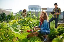 Gardeners in a community garden.