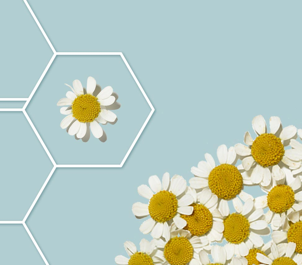 active naturals ingredient feverfew for skin